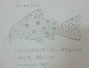 DSC_1746