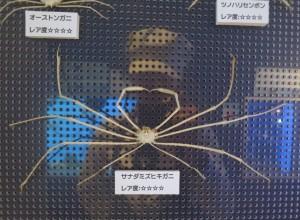 竹島水族館 館これ10