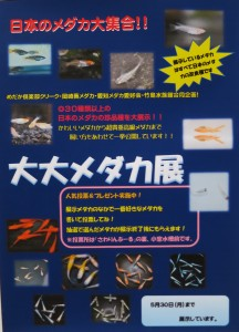 竹島水族館 メダカ展 1