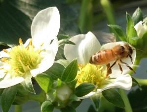 bamblebee2