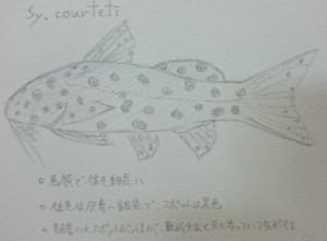 DSC_1749